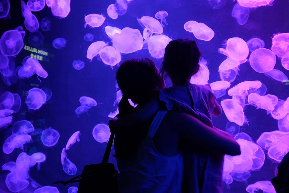 Mommies and their little ones can marvel at the diversity of aquatic creatures in the massive S.E.A. Aquarium.